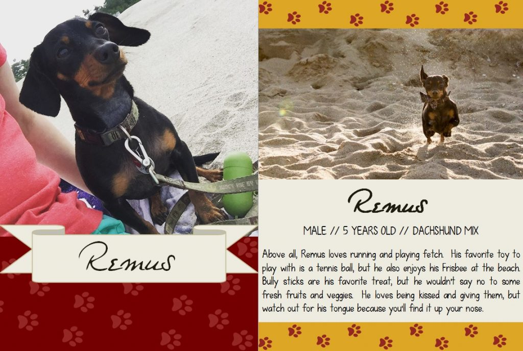 Remus's Dog Trading Card
